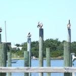 Birds on Posts