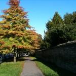 Wandering Oxford 6