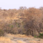 Game Drive 25 Sept 2017 PM