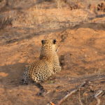 Game Drive 26 Sept 2017 AM
