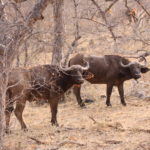Game Drive 26 Sept 2017 PM