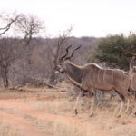 Game Drive 27 Sept 2017 PM