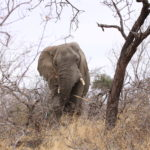 Game Drive 28 Sept 2017 AM