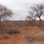 Game Drive 27 Sept 2017 AM