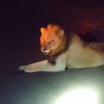 Game Drive with Sonya and Andrew