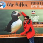 Iceland Puffin Poster